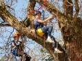 04 dans l'arbre à  enfants